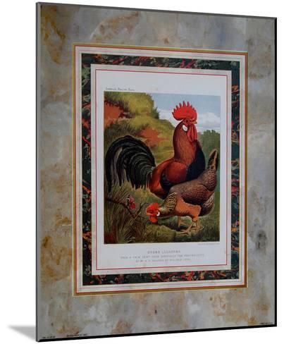 Brown Leg Horn-Cassell's Poultry Book-Mounted Art Print