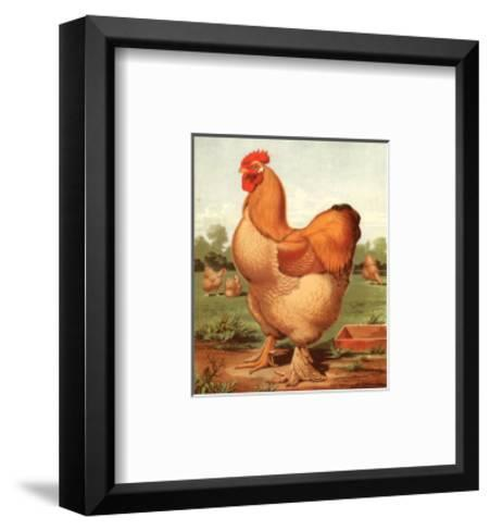 Buff. Cochin Cock-Cassell's Poultry Book-Framed Art Print
