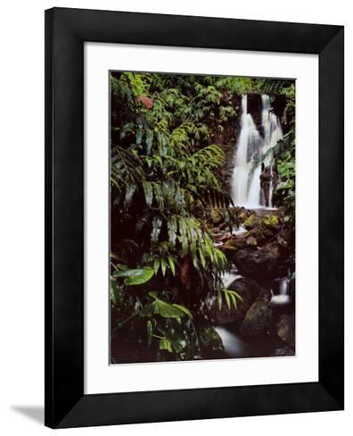 Rainforest Waterfall, Hawaii-William Neill-Framed Art Print