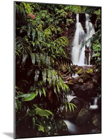 Rainforest Waterfall, Hawaii-William Neill-Mounted Art Print