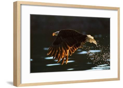 Leaders: Bald Eagle--Framed Art Print