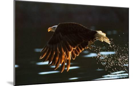 Leaders: Bald Eagle--Mounted Art Print