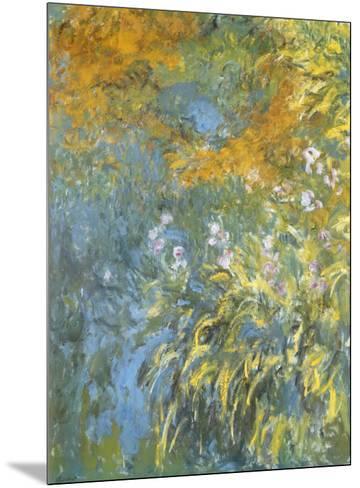 Yellow Iris-Claude Monet-Mounted Art Print