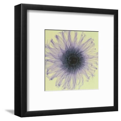 Dahlia-Steven N^ Meyers-Framed Art Print
