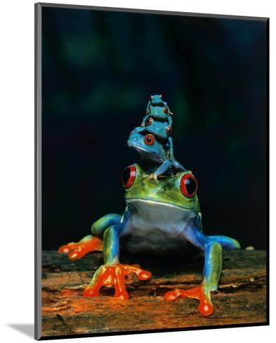 Frogs--Mounted Art Print
