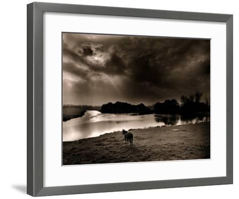 Horse Looking at the river, Normandie 99-Olivier Meriel-Framed Art Print