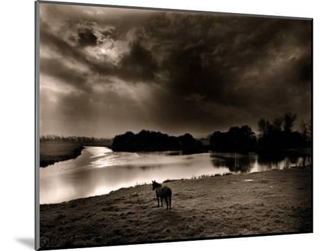 Horse Looking at the river, Normandie 99-Olivier Meriel-Mounted Art Print