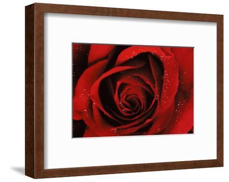 Quality--Framed Art Print