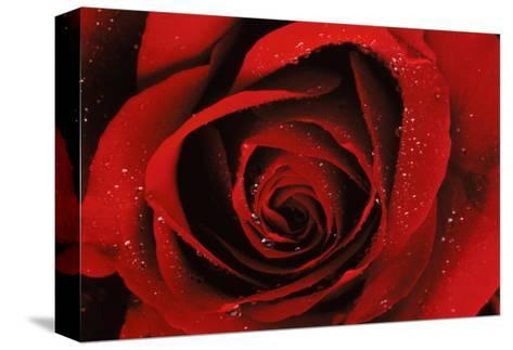Quality--Stretched Canvas Print