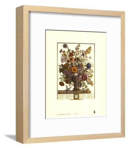 Twelve Months of Flowers, 1730, November-Robert Furber-Framed Art Print