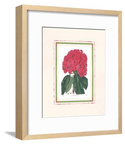 Rhododendron I--Framed Art Print