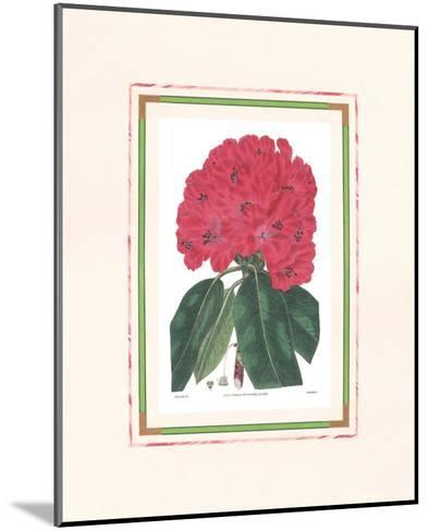 Rhododendron I--Mounted Art Print