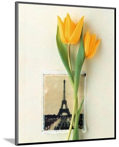 Tulip, Euro-Floral-Dorothy Gaubert Pyle-Mounted Art Print