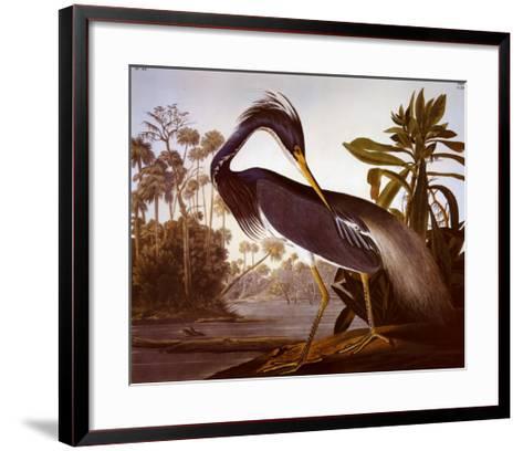 Louisiana Heron-John James Audubon-Framed Art Print