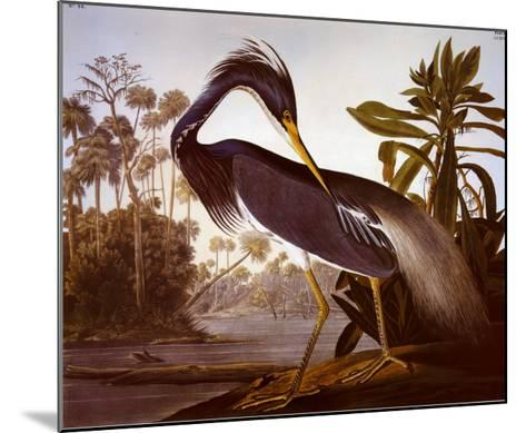 Louisiana Heron-John James Audubon-Mounted Art Print