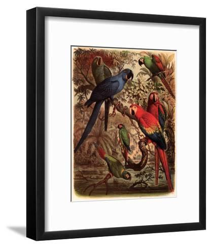 Tropical Birds III-Cassel-Framed Art Print
