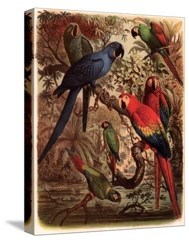 Tropical Birds III-Cassel-Stretched Canvas Print