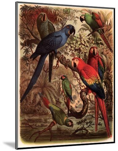 Tropical Birds III-Cassel-Mounted Art Print