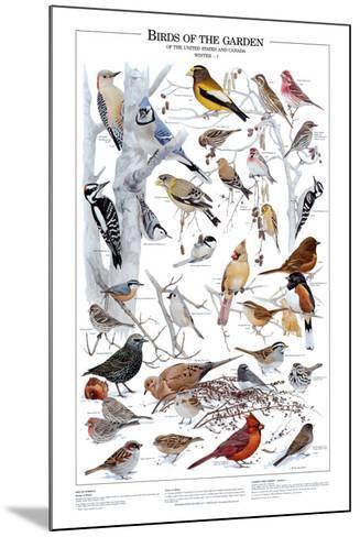 Birds of the Garden Winter I--Mounted Art Print