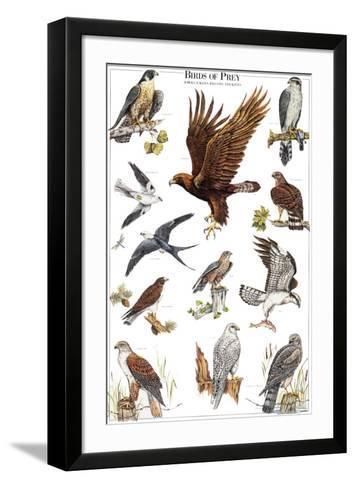 Birds of Prey II--Framed Art Print