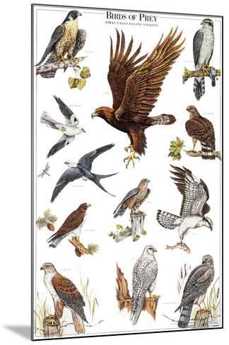 Birds of Prey II--Mounted Art Print