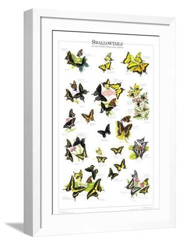 Swallowtails of US and Canada--Framed Art Print
