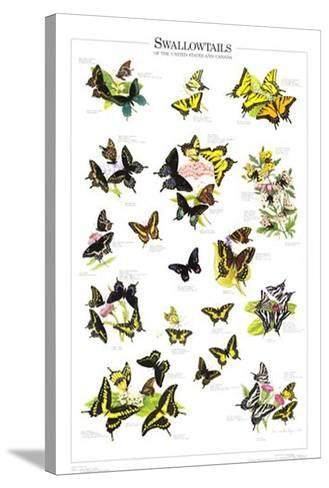 Swallowtails of US and Canada--Stretched Canvas Print