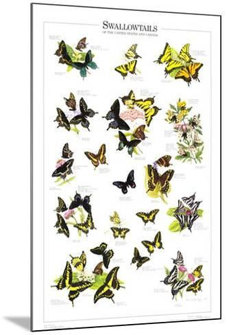 Swallowtails of US and Canada--Mounted Art Print