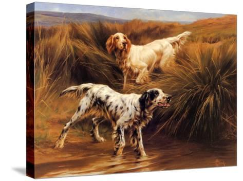 English Setters in a Marshland-Thomas Blinks-Stretched Canvas Print