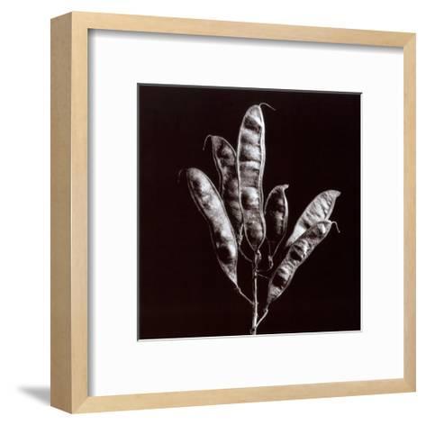 Simplicity-Trefor Ball-Framed Art Print