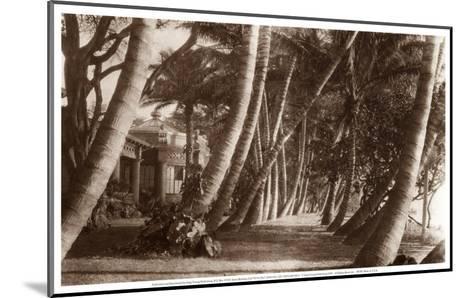 Coconut Lane, Waikiki, Hawaii, 1916--Mounted Art Print
