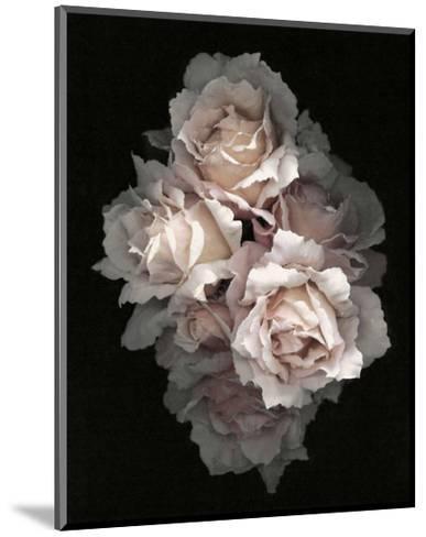 Timeless-S^ G^ Rose-Mounted Art Print