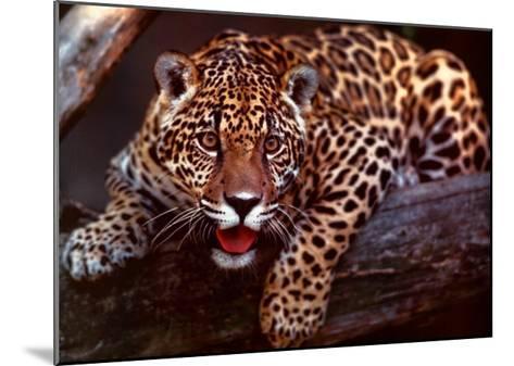 Jaguar-Gerry Ellis-Mounted Art Print