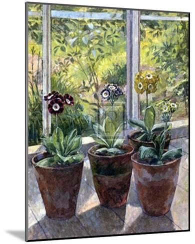Four Pots of Auriculas-J^ Morley-Mounted Art Print