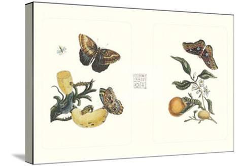 Entomology II--Stretched Canvas Print