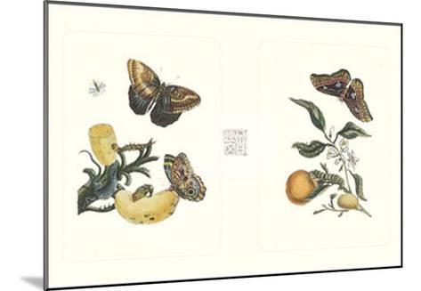 Entomology II--Mounted Art Print