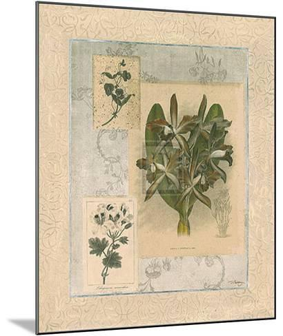 Histoire du Orchid VII-Dennis Carney-Mounted Art Print