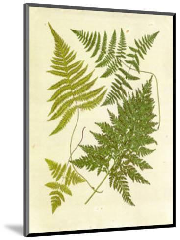 Ferns with Platemark VI--Mounted Art Print