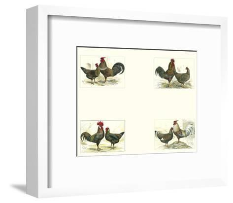 Roosters--Framed Art Print