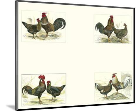 Roosters--Mounted Art Print