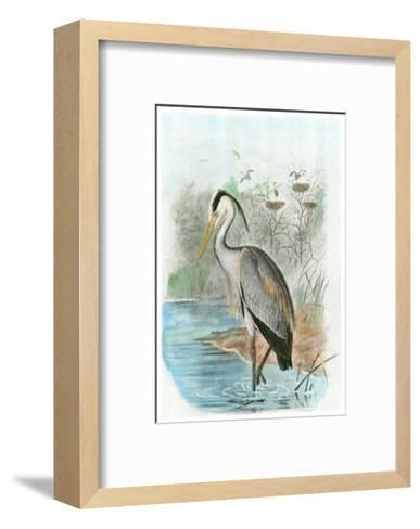 Common Heron--Framed Art Print