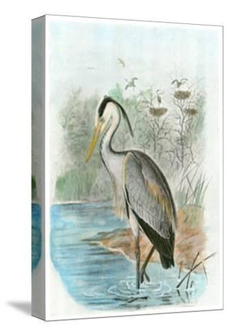 Common Heron--Stretched Canvas Print