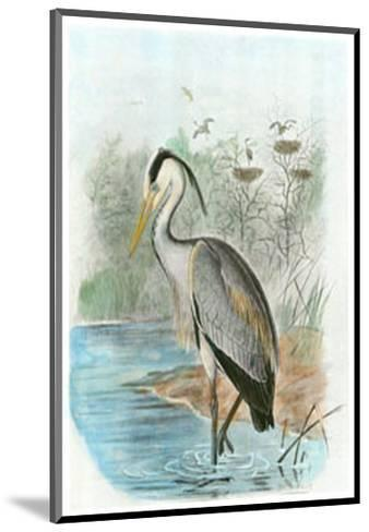 Common Heron--Mounted Art Print