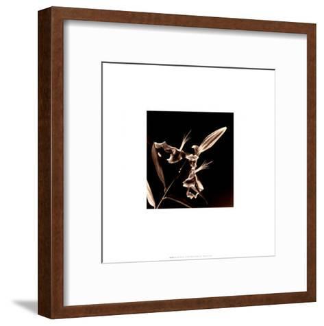 Flower Series V-Walter Gritsik-Framed Art Print