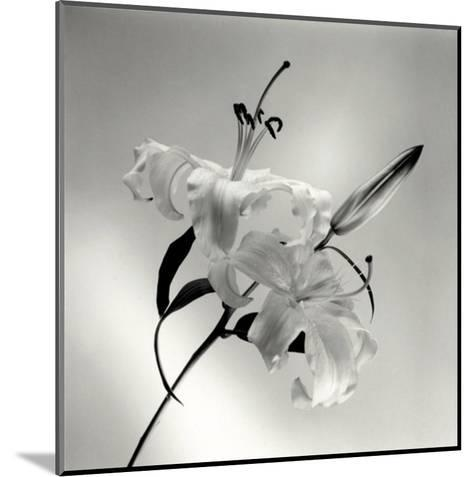 Flower Series X-Walter Gritsik-Mounted Art Print