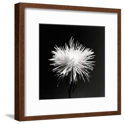 Flower Series XI-Walter Gritsik-Framed Art Print