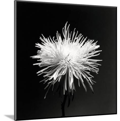 Flower Series XI-Walter Gritsik-Mounted Art Print