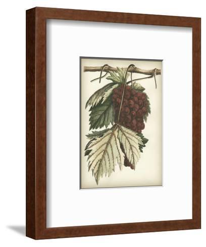 Red Grapes I--Framed Art Print