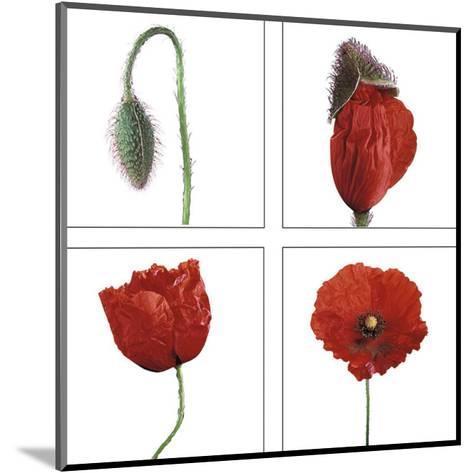 Metamorphosis of the poppy- Nuridsany & Perennou-Mounted Art Print