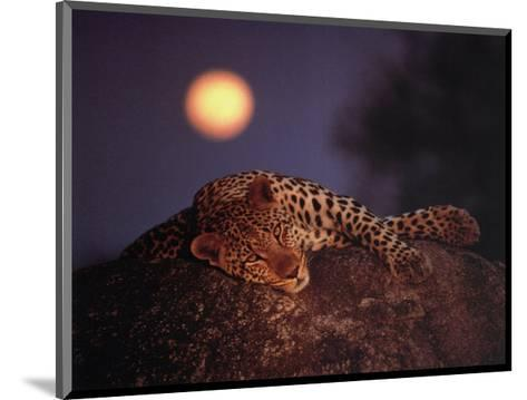 Leopard with Rising Moon- Thom-Mounted Art Print